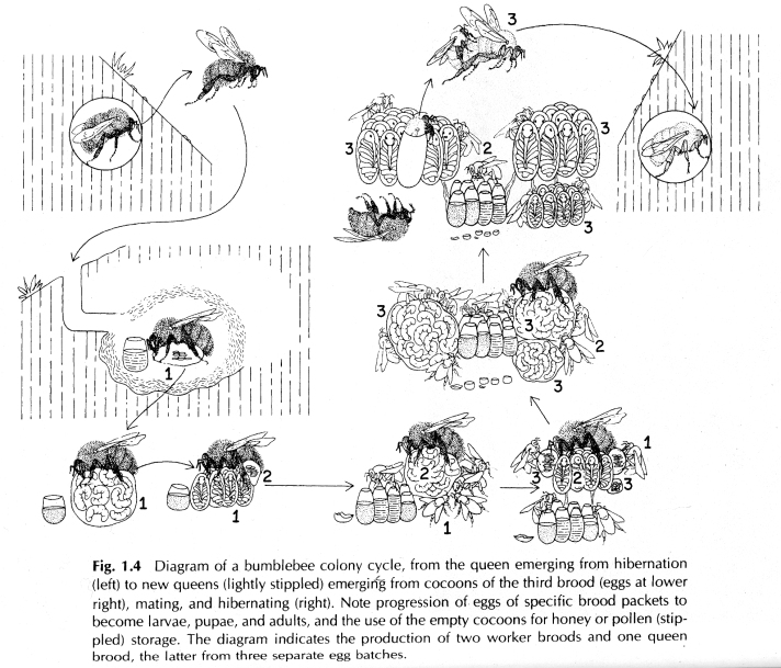 bee-economics-1_4
