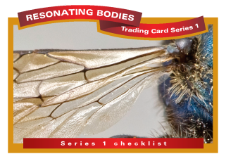 Resonating Bodies - Bee Trading Card