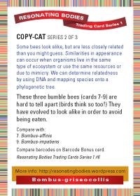 rbtcs1-rev2009-16-card-back-08