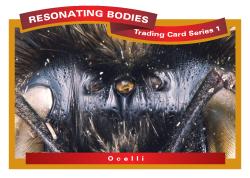 rbtcs1-rev2009-23-card-front-12