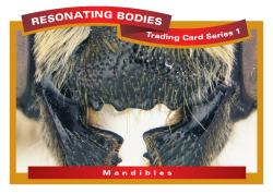 rbtcs1-rev2009-27-card-front-14