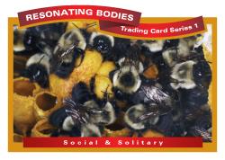 rbtcs1-rev2009-39-card-front-20