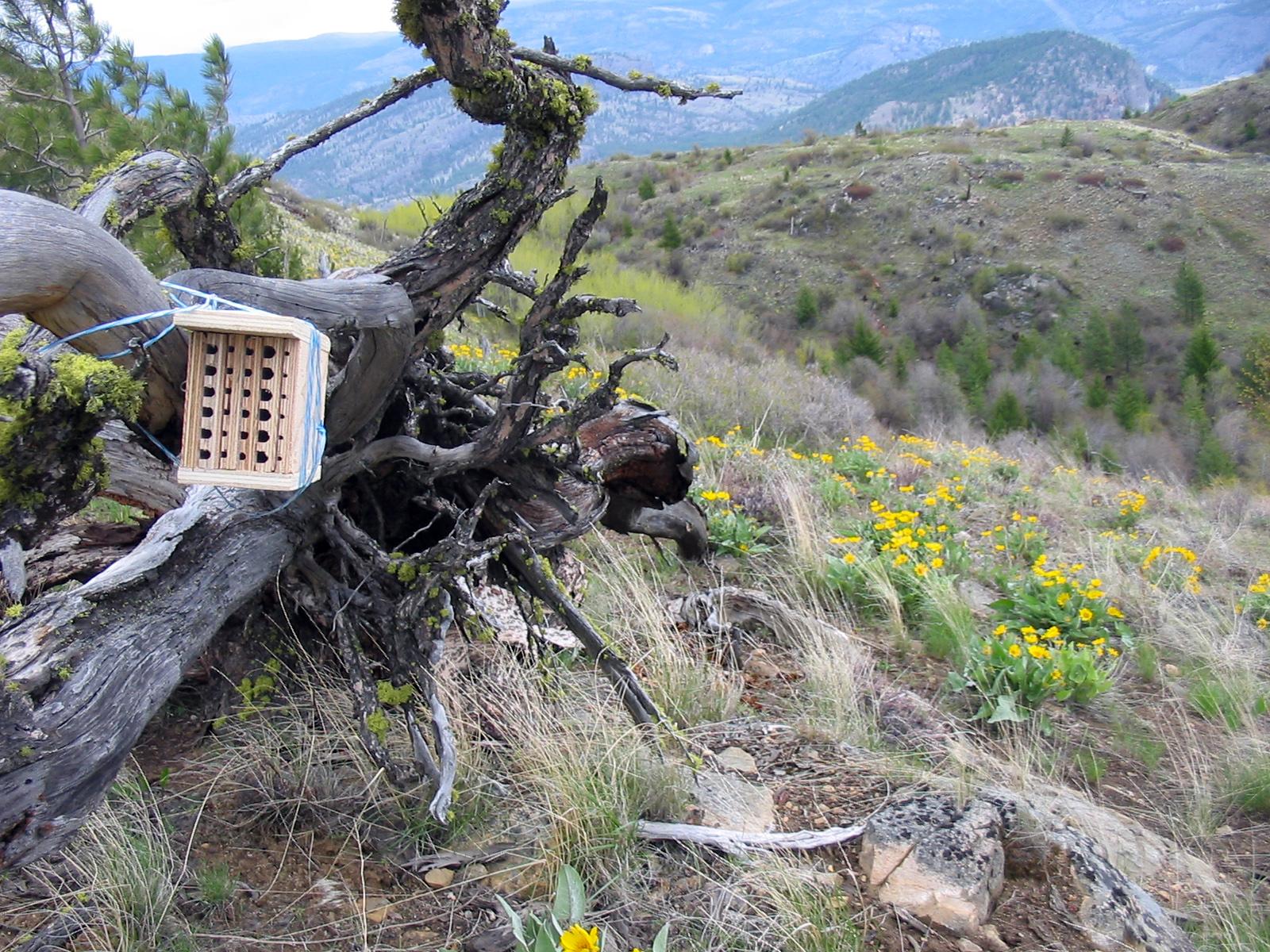 Bee Houses Around The World Resonating Bodies