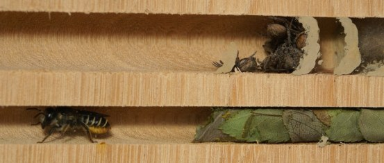 Resonating Bodies - Inhabitants - M. and T. nests