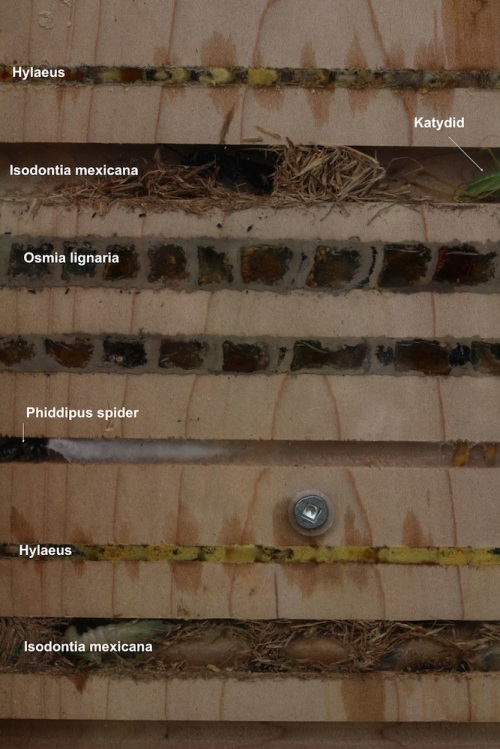 Nest Plank ID MacIvor copy