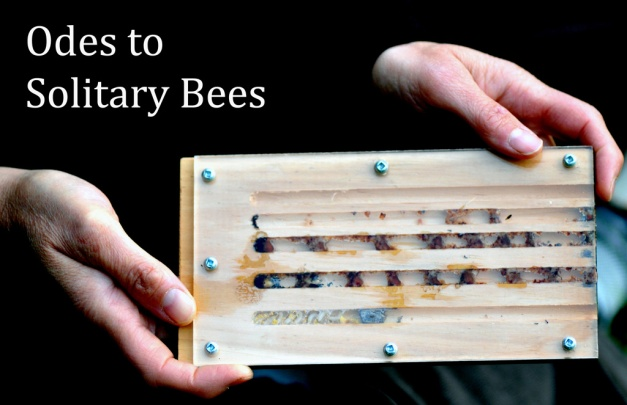 Odes to Solitary Bees hands 1024