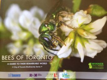 Bees of Toronto cover